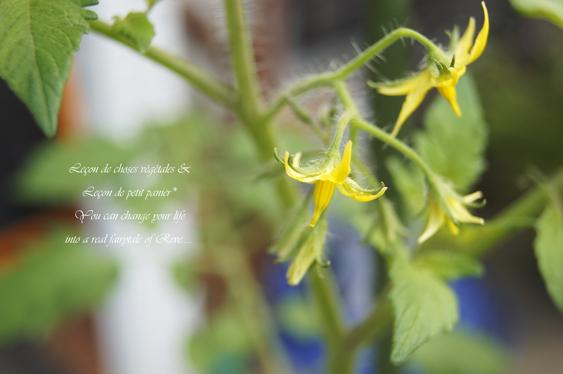 六月の庭。_b0365901_20173741.jpg