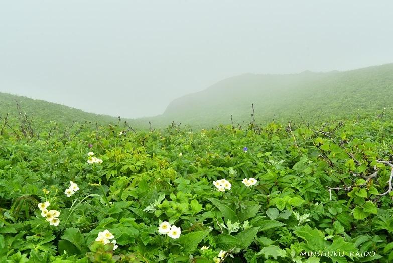 霧の中の桃岩コース_e0120026_08530174.jpg