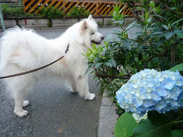 花を飾ろう♪_c0062832_14432968.jpg