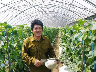 熊本産高級マスクメロン『肥後グリーン』はこれからが旬!2つの食感が楽しめお中元にも大人気! _a0254656_17412375.jpg