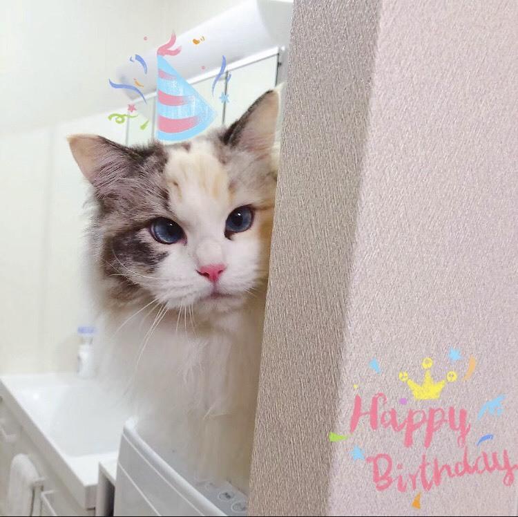 2歳のお誕生日_a0285571_21522433.jpg