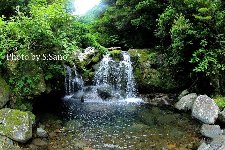 御蔵島の旅_b0348205_22330436.jpg