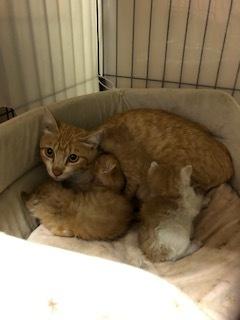 昨日ママ猫と子猫4匹保護しました。_d0171907_19464970.jpg