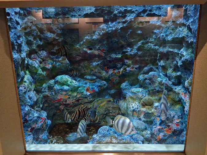 しながわ水族館「珍しい魚たち」②~タスマン海の生物たち、からまるシーポニー(August 2020)_b0355317_21322418.jpg