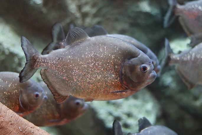 しながわ水族館「珍しい魚たち」②~タスマン海の生物たち、からまるシーポニー(August 2020)_b0355317_21455269.jpg