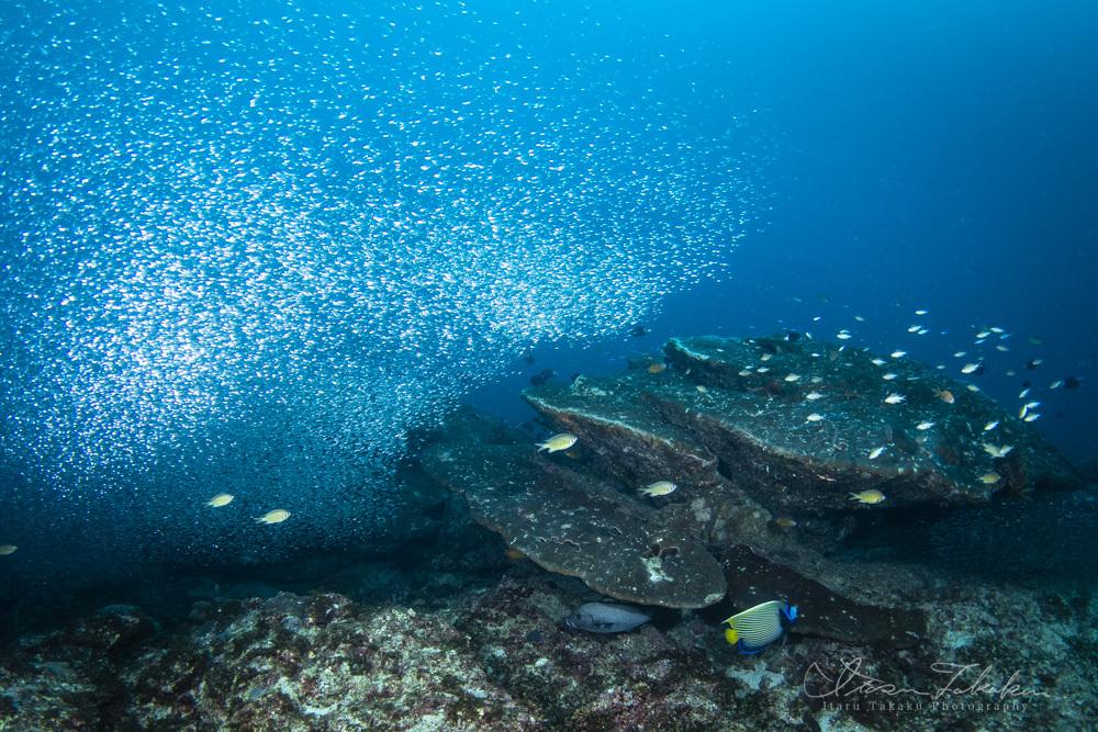 いいとこみっけ!小魚が爆発的に多い。_b0186442_08335931.jpg