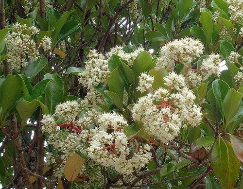 路傍の花、樹々の鳥(413) ~ 初夏の公園で咲く ~_b0102572_16360675.jpg