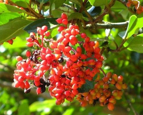 路傍の花、樹々の鳥(413) ~ 初夏の公園で咲く ~_b0102572_16362181.jpg
