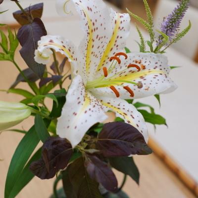 オークリーフ(絵画教室の花28)_f0049672_18493146.jpg