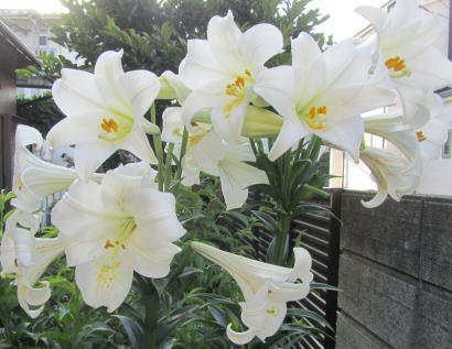小さな庭の花木_c0220597_14555397.jpg