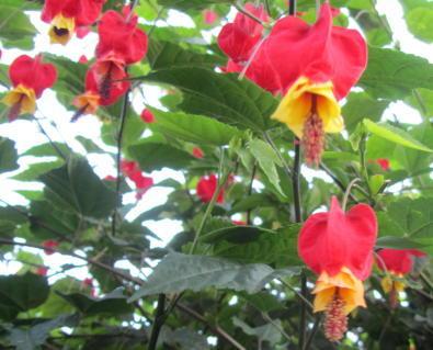 小さな庭の花木_c0220597_14565670.jpg