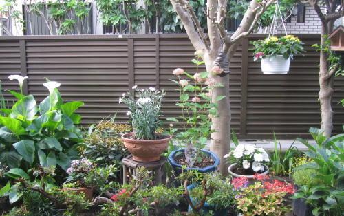 小さな庭の花木_c0220597_14574411.jpg