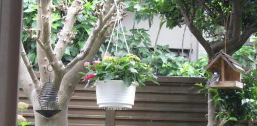 小さな庭の花木_c0220597_14593436.jpg