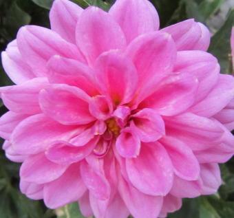 小さな庭の花木_c0220597_15002253.jpg