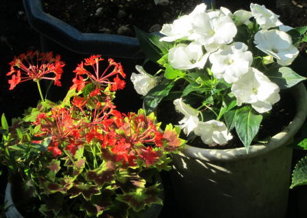 小さな庭の花木_c0220597_15024388.jpg