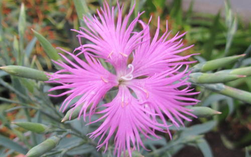 小さな庭の花木_c0220597_15025609.jpg