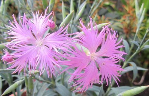 小さな庭の花木_c0220597_15032020.jpg