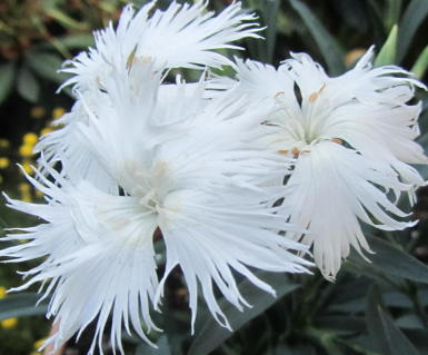 小さな庭の花木_c0220597_15033966.jpg