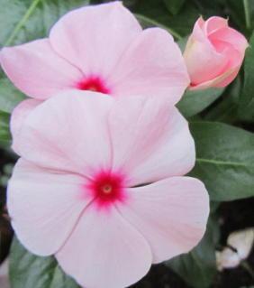 小さな庭の花木_c0220597_15043772.jpg