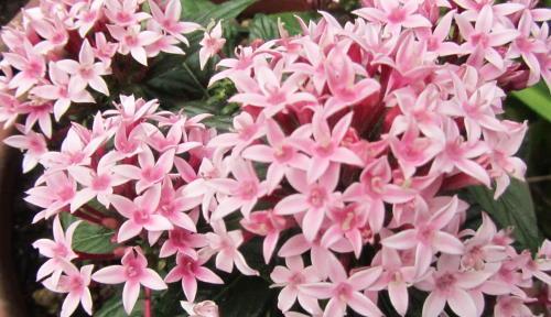 小さな庭の花木_c0220597_15063932.jpg