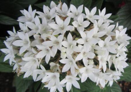 小さな庭の花木_c0220597_15065920.jpg