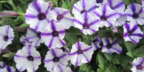 小さな庭の花木_c0220597_15073410.jpg
