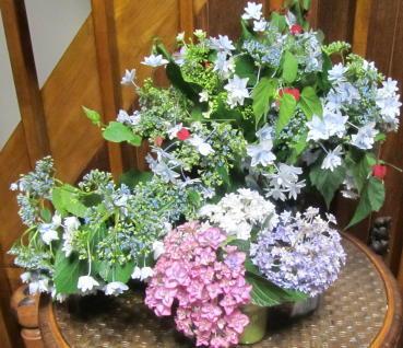 小さな庭の花木_c0220597_15083785.jpg