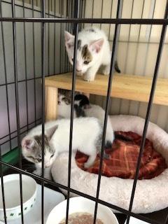 今日も子猫4匹預かりました。_d0171907_14354081.jpg