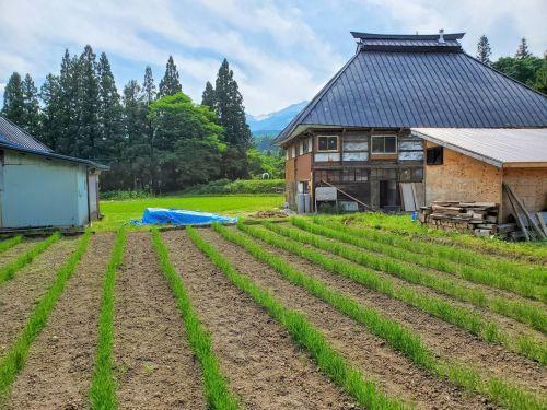 麦の成長_b0304722_17582046.jpg
