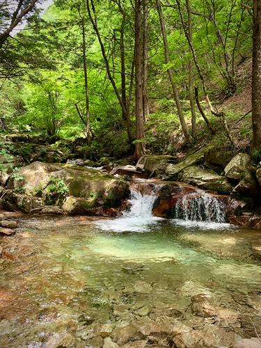 森の中でデジタル・デトックス_e0243332_19373418.jpg