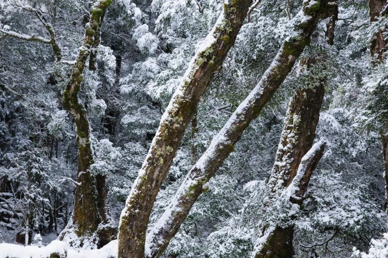 静かな冬 タスマニア_f0050534_09222087.jpg
