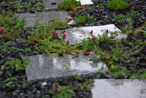 梅雨の典型_f0169567_09155990.jpg