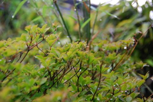 梅雨の典型_f0169567_09164475.jpg