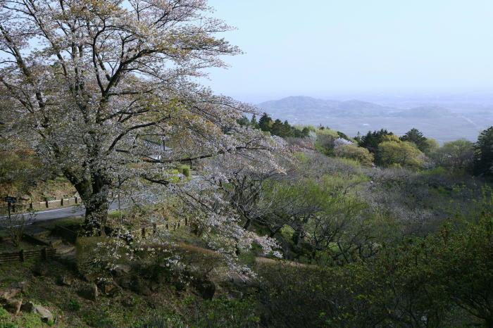筑波山の桜_a0120774_21061828.jpg