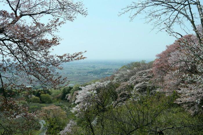 筑波山の桜_a0120774_21065772.jpg