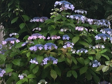 花壇より_b0011075_11030509.jpg