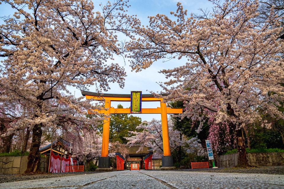 桜 2021 平野神社! _b0128581_18563987.jpg