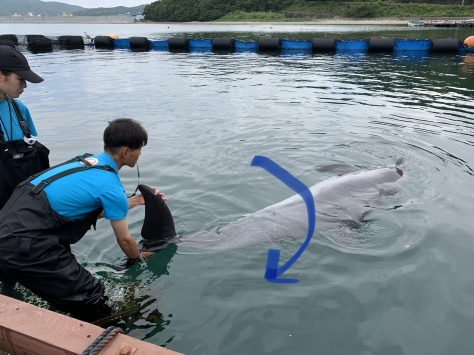 イルカさんの利き手⁉︎_d0163407_17063936.jpeg