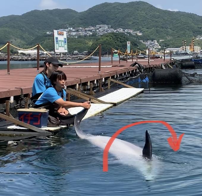 イルカさんの利き手⁉︎_d0163407_17072597.jpeg