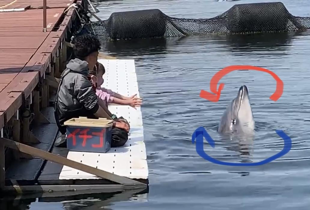イルカさんの利き手⁉︎_d0163407_17074559.jpeg