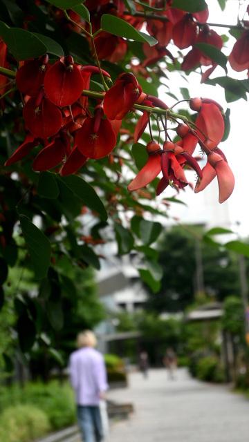 日々の写真から_c0047919_18221007.jpg