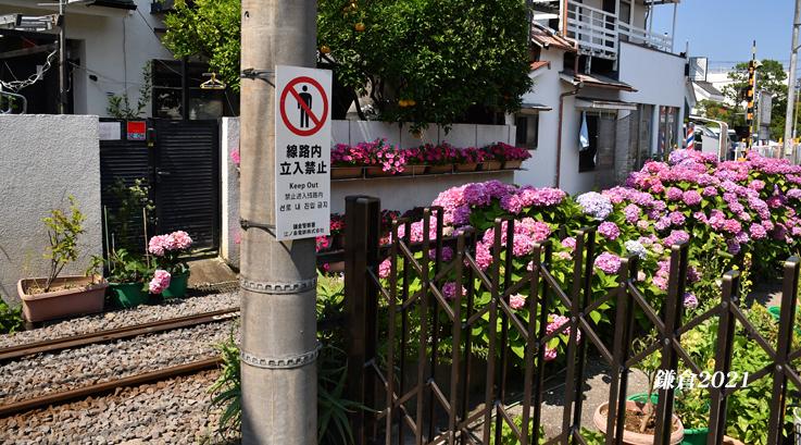 お気に入りのスポットが‥‥『そうだ 鎌倉、行こう 2021』_d0251161_07541928.jpg