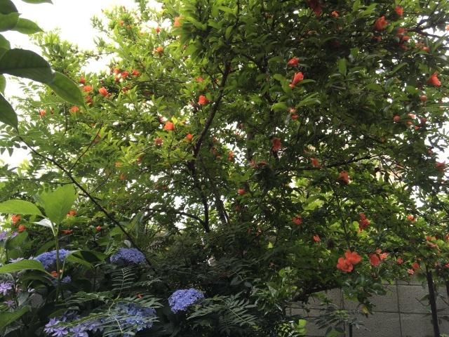 庭の花々_a0120264_00392716.jpeg