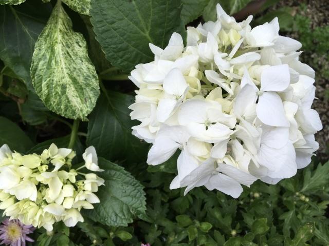 庭の花々_a0120264_00443583.jpeg