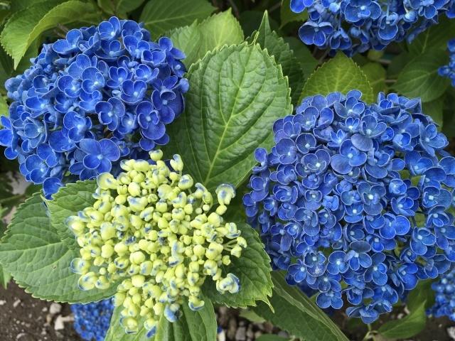 庭の花々_a0120264_00503250.jpeg