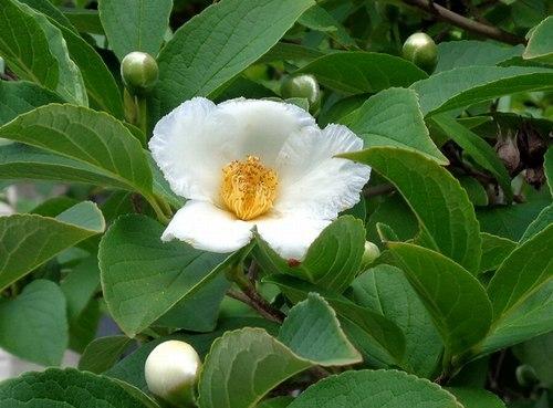 路傍の花、樹々の鳥(414) ~ 蒸し暑さをこらえて ~_b0102572_17594140.jpg