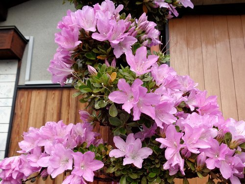 路傍の花、樹々の鳥(414) ~ 蒸し暑さをこらえて ~_b0102572_18093254.jpg