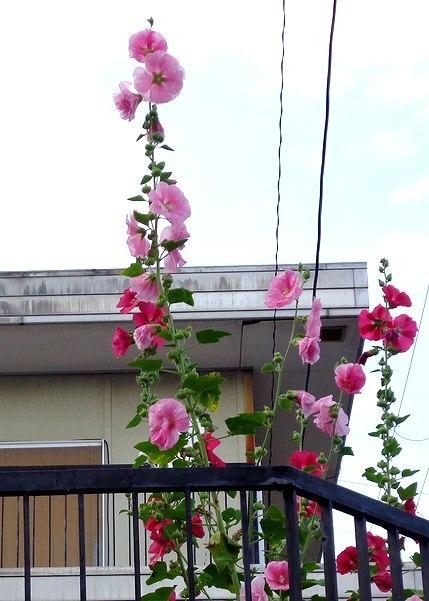 路傍の花、樹々の鳥(414) ~ 蒸し暑さをこらえて ~_b0102572_18151142.jpg