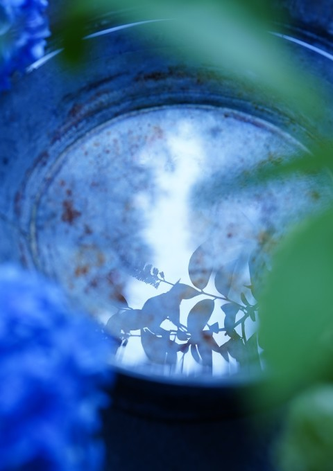 梅雨入り ~紫陽花~_c0188784_19513038.jpg