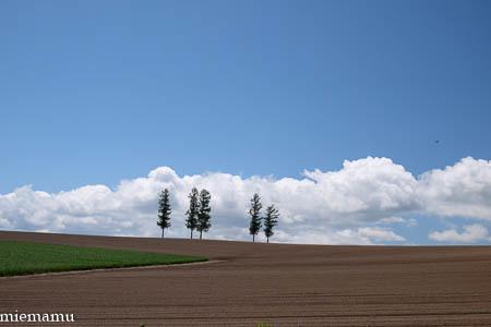 新緑のマイルドセブンの丘からvol.2~6月の美瑛_d0340565_19170927.jpg
